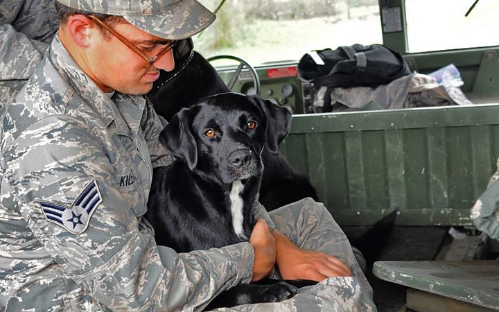 Louisiana Air National Guard Rescue Dogs From Rooftop